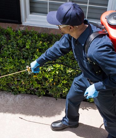 Pest Management Help With Keeping Nasty Unwanted pests From The Home